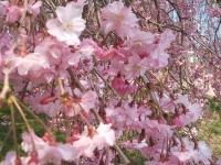 展勝地2014-04-26-北上市070