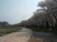 展勝地2014-04-26-北上市131