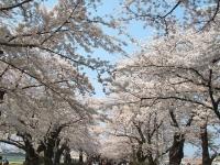 展勝地2014-04-26-北上市128