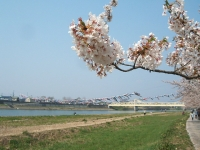展勝地2014-04-26-北上市077