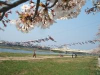 展勝地2014-04-26-北上市080