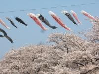 展勝地2014-04-26-北上市091
