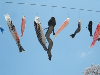 展勝地2014-04-26-北上市099