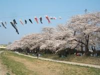 展勝地2014-04-26-北上市097