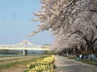 展勝地2014-04-26-北上市107