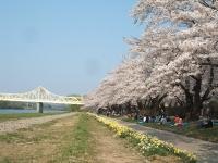 展勝地2014-04-26-北上市106