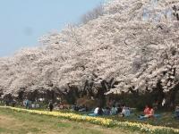 展勝地2014-04-26-北上市105
