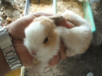 2014-05-17鳩兔鶏259