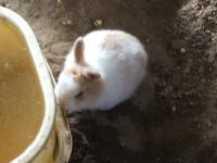 2014-05-17鳩兔鶏258