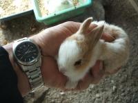 2014-05-17鳩兔鶏261