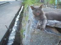 2014-06-20-笑う猫プーちゃん002