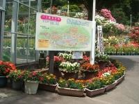 2014-06-21花巻温泉街バラ園001