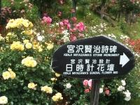 2014-06-21花巻温泉街バラ園022