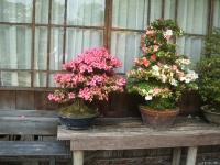 2014-06-21花巻温泉街バラ園043