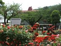 2014-06-21花巻温泉街バラ園070