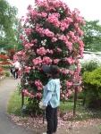 2014-06-21花巻温泉街バラ園066