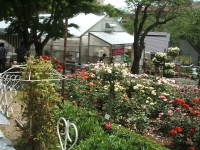 2014-06-21花巻温泉街バラ園074