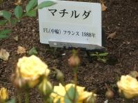 2014-06-21花巻温泉街バラ園100