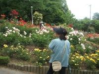 2014-06-21花巻温泉街バラ園097