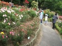 2014-06-21花巻温泉街バラ園103