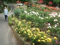 2014-06-21花巻温泉街バラ園102