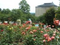 2014-06-21花巻温泉街バラ園108
