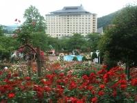 2014-06-21花巻温泉街バラ園117
