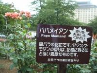 2014-06-21花巻温泉街バラ園132