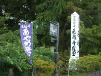 2014-06-28毛越寺あやめ祭り002