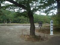 2014-06-28毛越寺あやめ祭り014