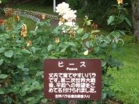 2014-06-21花巻温泉街バラ園135
