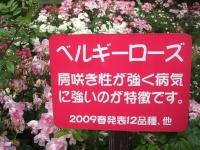 2014-06-21花巻温泉街バラ園147