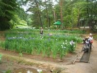 2014-06-28毛越寺あやめ祭り032