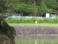 2014-06-28毛越寺あやめ祭り027