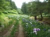 2014-06-28毛越寺あやめ祭り035