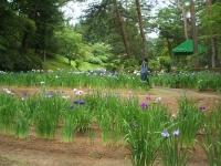 2014-06-28毛越寺あやめ祭り034