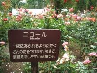 2014-06-21花巻温泉街バラ園155