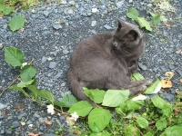 猫プーちゃんの脱法ハーブ屋スナック山015