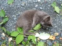猫プーちゃんの脱法ハーブ屋スナック山014