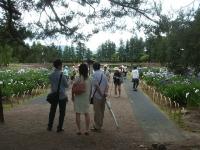 2014-06-28毛越寺あやめ祭り052