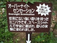 2014-06-21花巻温泉街バラ園174
