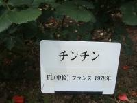 2014-06-21花巻温泉街バラ園172