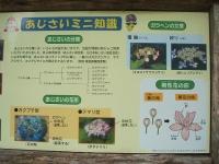 みちのく紫陽花園2014-07-05-0001-2