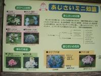 みちのく紫陽花園2014-07-05-0001
