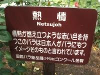 2014-06-21花巻温泉街バラ園202