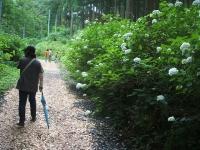 みちのく紫陽花園2014-07-05-024