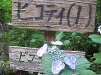 みちのく紫陽花園2014-07-05-048