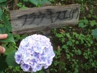 みちのく紫陽花園2014-07-05-053