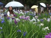 2014-06-28毛越寺あやめ祭り063