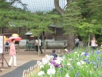 2014-06-28毛越寺あやめ祭り061